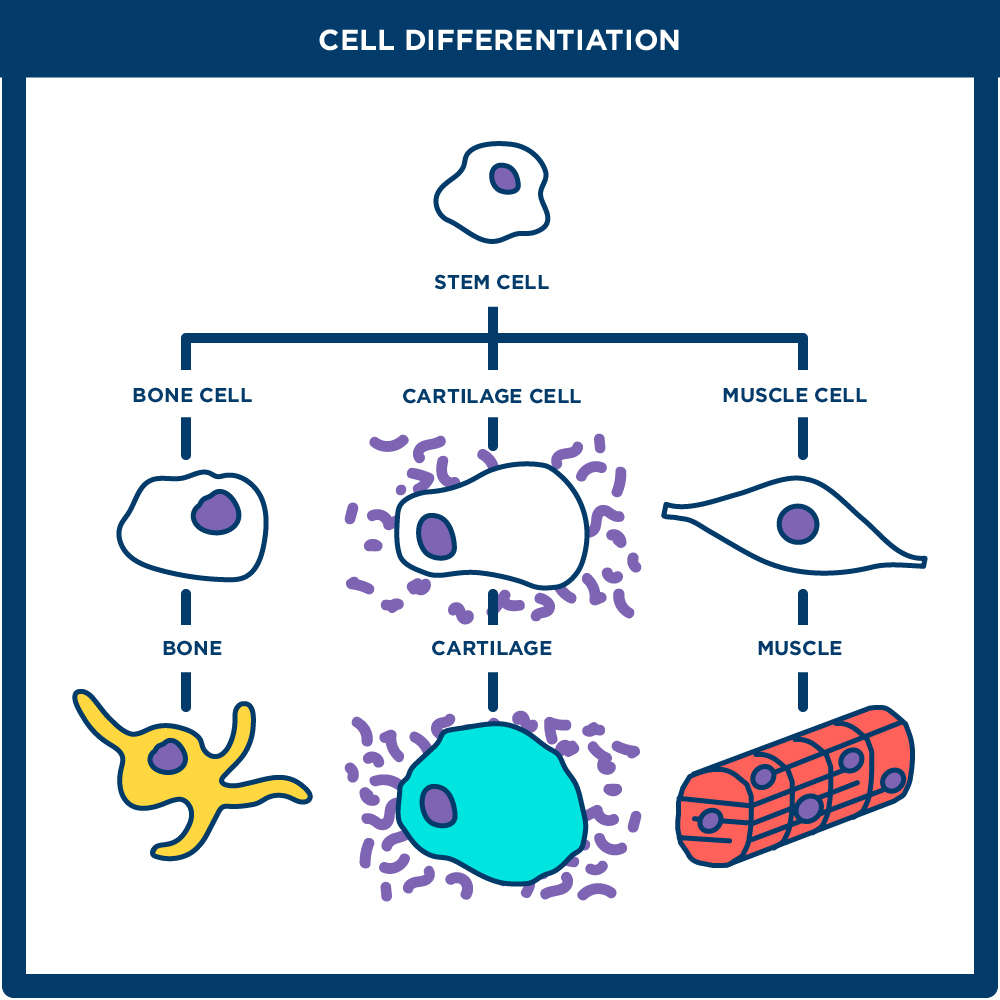 normal cells vs transformed cells 28136879 normal cell cancer cell onco understanding cancerppt lecture  causes of cancer normal cells transform into cancer cells because of damage to dna.